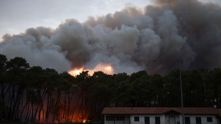 Le feu a ravagé une partie de la forêt de Chiberta, à Anglet (Pyrénées-Atlantiques), le 30 juillet 2020. (GAIZKA IROZ / AFP)