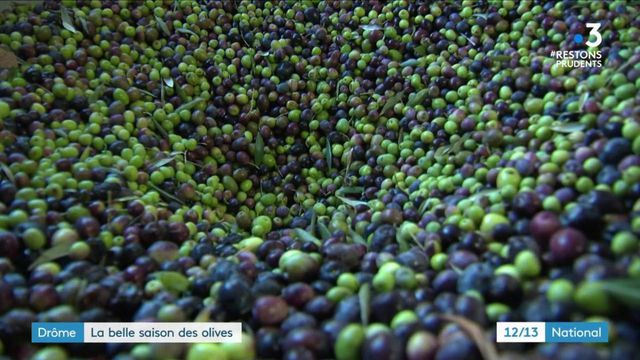 Drôme : une belle année pour la récolte des olives