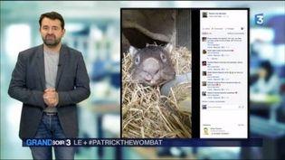 Patrick le wombat est mort à 31 ans (France 3)