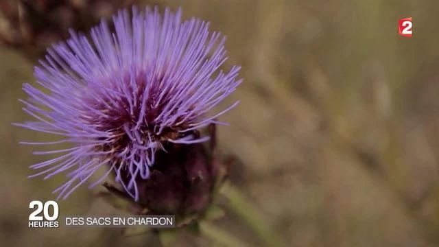 Le chardon, la plante du futur ?