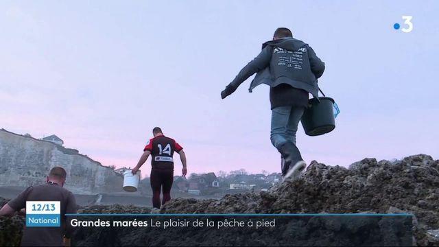 Loisirs : en Seine-Maritime, les plaisirs de la pêche à pied