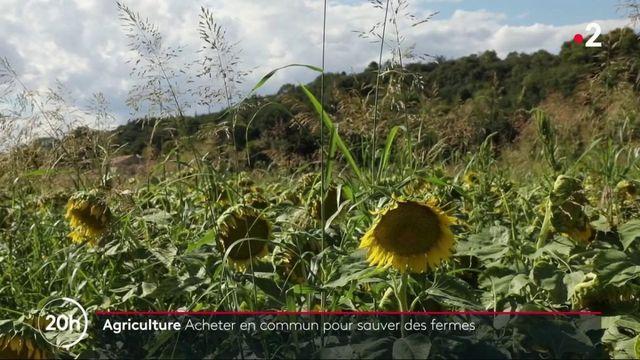Agriculture : acheter en commun pour sauver des fermes