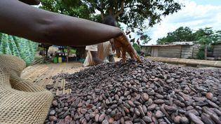Un fermier vérifie le séchage des fèves de cacao dans une ferme de M'Brimbo, un village de Côte d'Ivoire. (ISSOUF SANOGO / AFP)