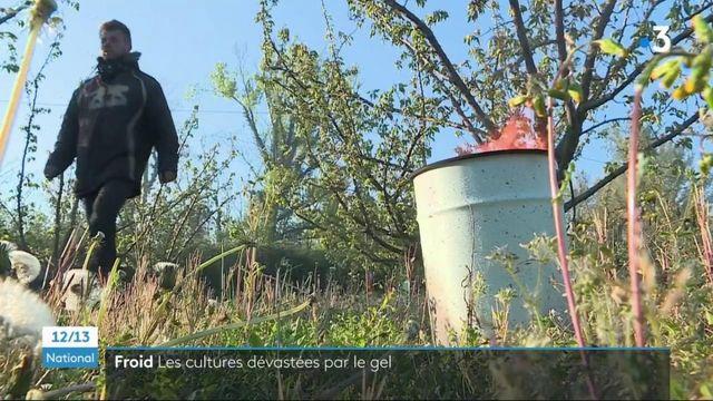 Agriculture : le gouvernement active le régime de calamité agricole suite aux épisodes de gel