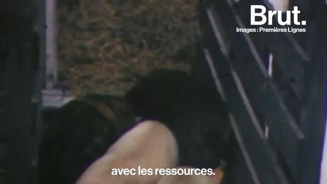 Brut : Benoît Bringer