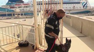 Covid-19 : un chien renifleur pour dépister les passagers d'un ferry (France 2)