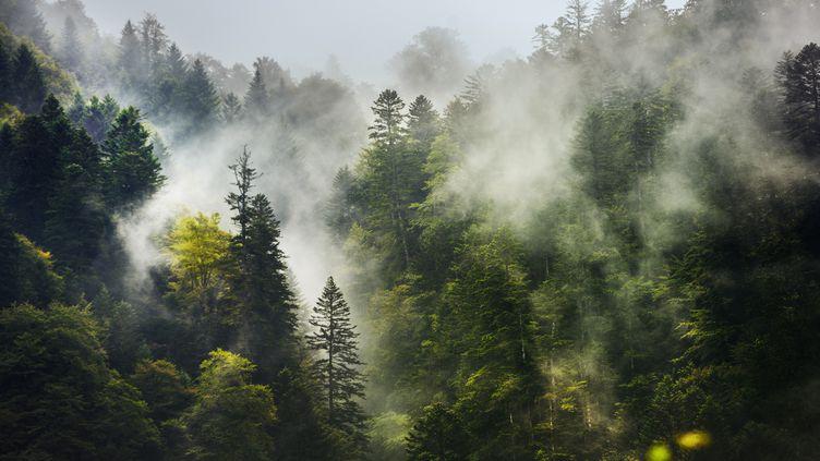 Forêt de la Vallée du Lys à Luchon, en Haute-Garonne. (GONZALO AZUMENDI / STONE RF / GETTY IMAGES)