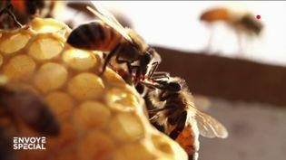 Envoyé spécial. Un monde sans abeilles (ENVOYÉ SPÉCIAL  / FRANCE 2)