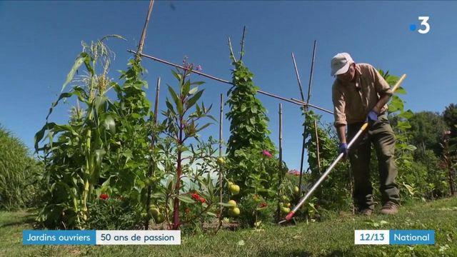 Somme : à la découverte d'un passionné de jardin