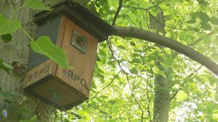Biodiversité : en Alsace, des bénévoles entretiennent les nichoirs pour faire revenir les oiseaux (France 2)