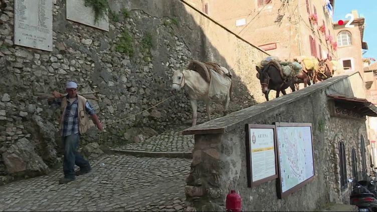 Dans la petite commune d'Artena, en Italie, les poubelles sont ramassées à dos de mulet, car les rues sont trop étroites pour les camions. (FRANCE 2)