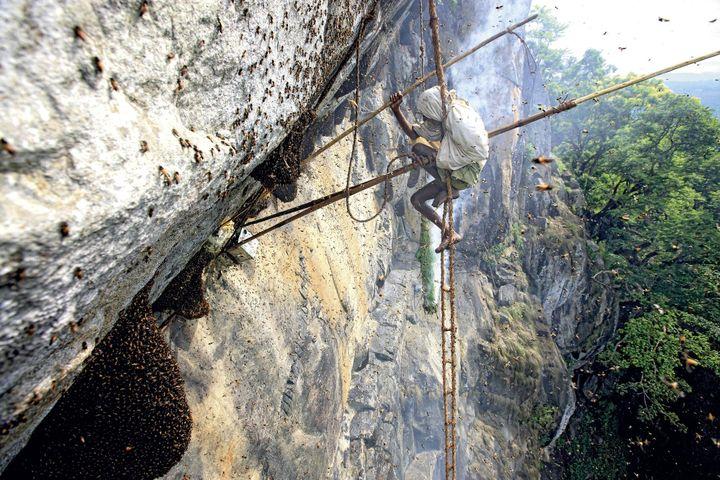 Récolte du miel en Inde (Eric Tourneret)
