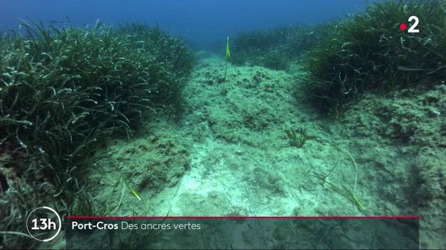 Port-Cros : des mesures pour protéger la flore aquatique