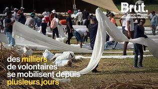 VIDEO. Marée noire à l'île Maurice : après le naufrage du MV Wakashio, les habitants s'organisent (BRUT)