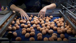Des œufs dans un élevage de poules pondeuses à Merksplas, en Belgique, le 8 août 2017. (KRISTOF VAN ACCOM / BELGA MAG / AFP)