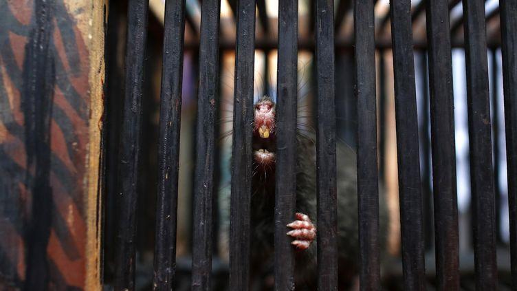 Un rat derrière une grille, à Yangon, en Birmanie, le 15 septembre 2014. (SOE ZEYA TUN / REUTERS)