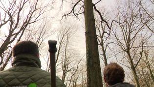 Un chêne aux mensurations parfaites dans les forêts de l'Eure. (FRANCEINFO)