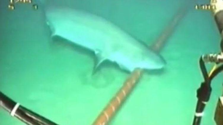 Capture d'écran, un requin s'attaque à un câble internet sous la mer ( YOUTUBE / FRANCETV INFO )
