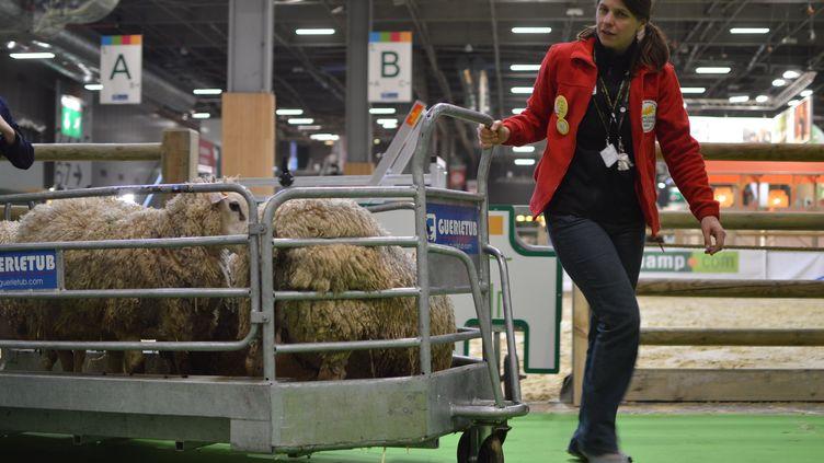 Retour au bercail pour les animaux du Salon de l'agriculture (photo d'illustration). (VICTOR VASSEUR / RADIO FRANCE)