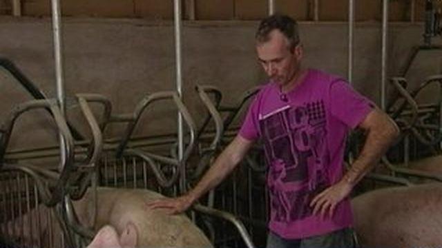 En Bretagne, la filière porcine à bout de souffle