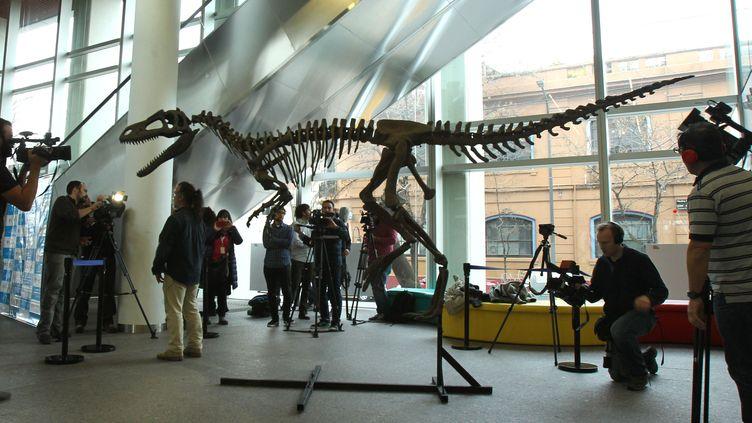 Le squelette duGualichoshinyae, le 13 juillet 2016 à Buenos Aires (Argentine). (ALBERTO ORTIZ / SIPA)