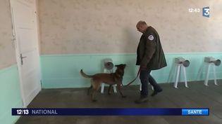 Un chien formé à détecter des tumeurs cancéreuses (FRANCE 3)