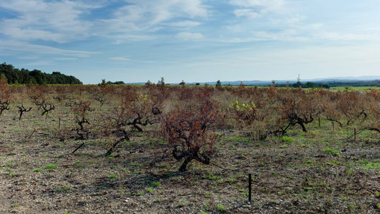 (Si on ne fait rien pour le limiter, le réchauffement climatique aura des effets de plus en plus néfastes sur l'agriculture, préviennent les expertes du GIEC. Photo d'illustration © Maxppp)