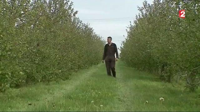 Bretagne : une pénurie de pomme provoquée par le gel