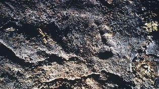 Traces de pas dans la grotte Chauvet (1999)  (Garcia / CNRS / SIPA)