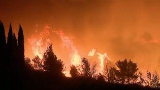 L'incendie qui s'est déclaré dans l'Aude mercredi 14 août a cessé de progresser. 900 hectares ont déjà brûlé. (FRANCE 2)