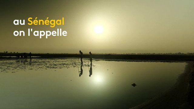 """Sénégal : à la découverte de """"la reine du sel"""""""