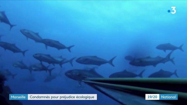 Justice : des plongeurs condamnés pour préjudice écologique à Marseille