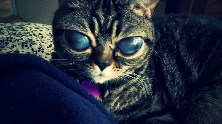 La chatte Matilda souffre de buphtalmie. (ALIENCATMATILDA.COM)