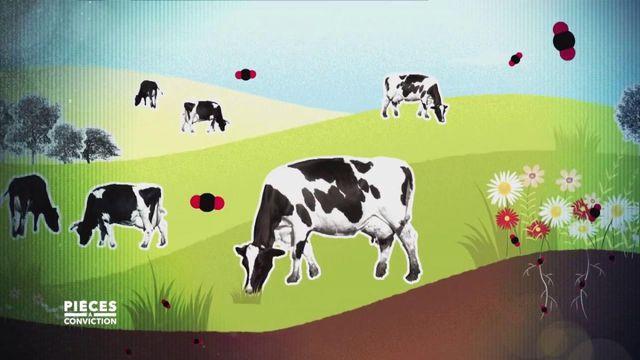 """Pièces à conviction. Non, les vaches au pré ne polluent pas forcément, et """"Pièces à conviction"""" explique pourquoi"""