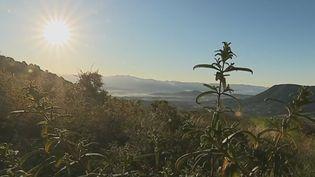 Le panorama du mont Gozzi. (France 2)