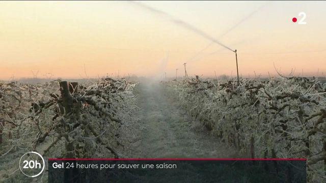 Vague de froid : face au gel, les agriculteurs se démènent pour protéger les cultures