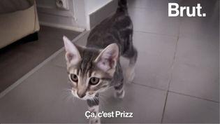 VIDEO. Grâce à Ron'Rhône, Léa a pu recueillir deux chats abandonnés (BRUT)