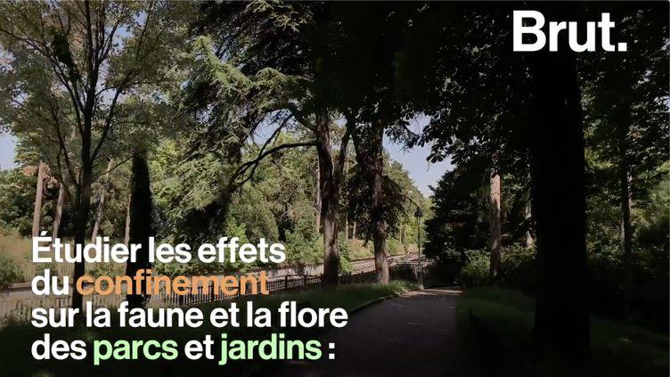VIDEO. Avec le confinement, la biodiversité des parcs parisiens s'est fortement développée (BRUT)