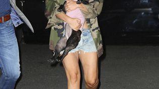 Lady Gaga et l'un de ses chiens à New York. (XPX/STAR MAX/IPX/AP/SIPA / SIPA)