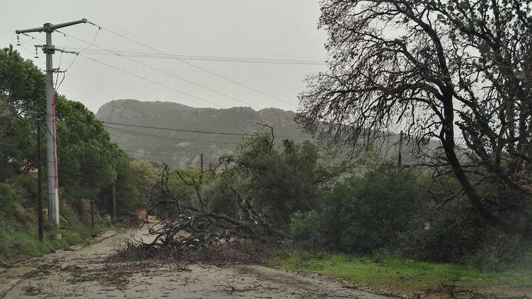 Les rafales de vent ont provoqué des dégâts sur les installations électriques en Corse. (Ma Rion / Facebook)