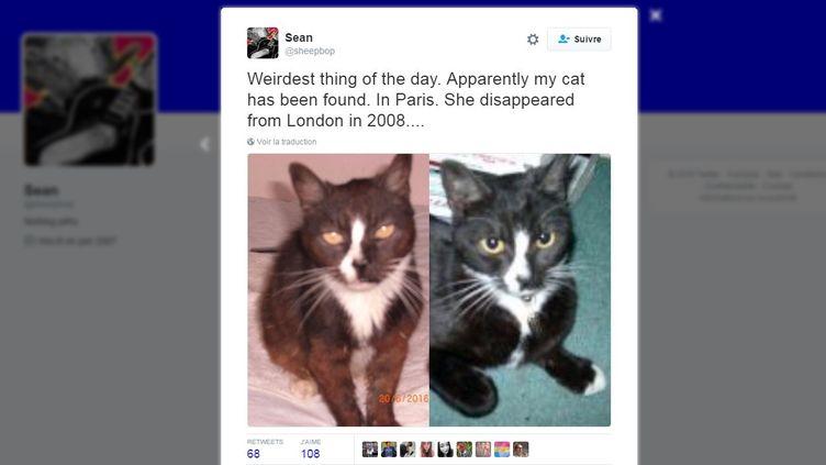 Moon Unit, une chatte disparue à Londres (Royaume-Uni) en 2008, a été retrouvée à Arpajon (Essonne), en mai 2016. (TWITTER)
