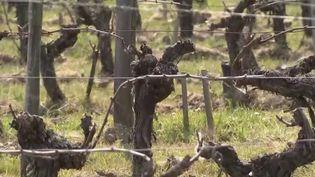 Les arboriculteurs et les viticulteurs ont subi une semaine noire, rapporte France 2, vendredi 9 avril. Le gel a anéanti la majorité de leur récolte. (CAPTURE ECRAN FRANCE 2)