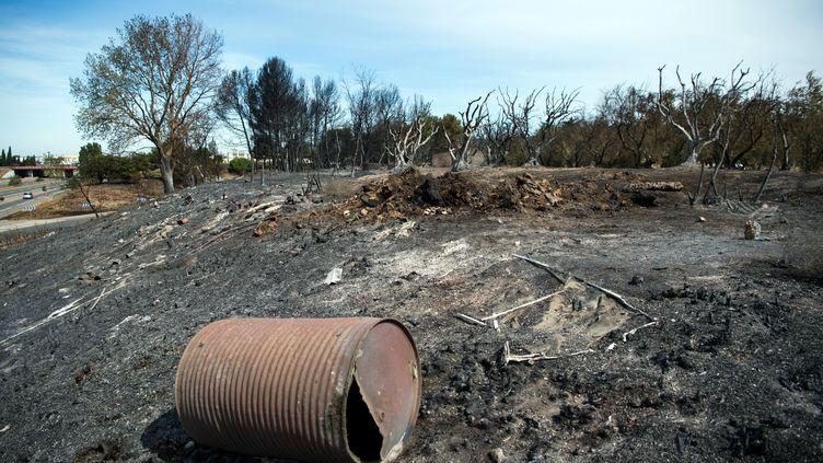 En tout plus de 3 000 hectares de garrigue et de forêt sont partis en fumée dans les Bouches-du-Rhône. Les espaces naturels détruits mettront de cinq à dix ans à se régénerer. (BERTRAND LANGLOIS / AFP)