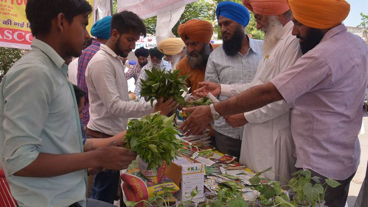 Ces cultivateurs du Pendjab indienvérifient la qualité des semences et des plants de légumes. Des centaines d'entre eux ont participé à cette foire qui leur permet d'échanger sur la culture maraîchère et les problèmes liés à l'agriculture. Ce secteur d'activités reste de loin le premier employeur en Inde. Les promesses du gouvernement, conduit par le parti nationaliste hindou Bharatiya Janata Party, surviennent alors même que des élections ont lieu dans plusieurs grands Etats en 2016 et 2017, et que le vote du monde rural sera crucial. (NARINDER NANU / AFP)