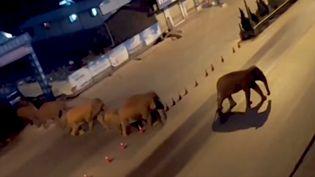 Capture écran d'une vidéo des éléphants diffusée par l'agence de presse Reuters. (CAPTURE ECRAN VIDEO REUTERS)