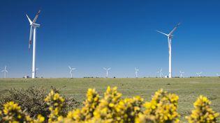 Des éoliennes sur l'île de Madère, au Portugal, le 12 mai 2014. (GUIZIOU FRANCK / HEMIS.FR / AFP)
