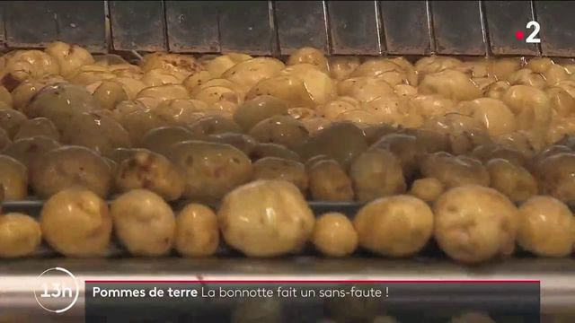 Agriculture :la bonnotte, pomme de terre d'exception