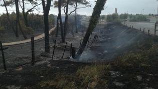 Le parc Izadia a été ravagé par les flammes lors de l'incendie dans la forêt du Pignada à Anglet, le 30 juillet 2020. (THIBAULT VINCENT / RADIOFRANCE)
