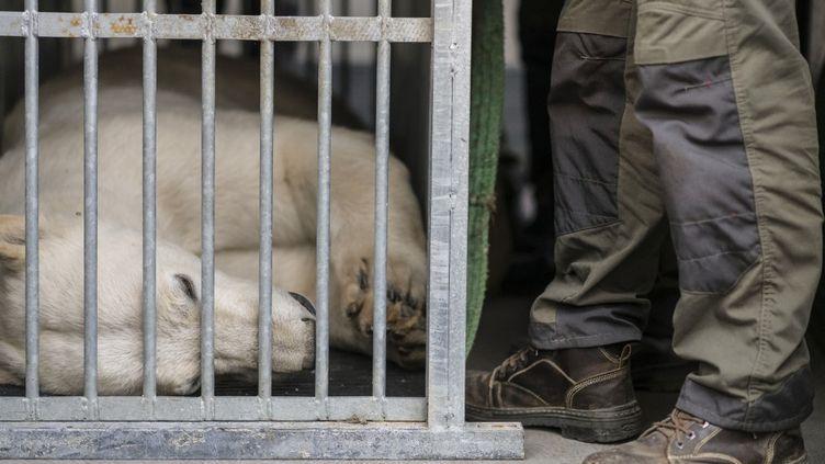 Un ours polaire dans une cage au zoo de Mulhouse, le 9 avril 2020. (SEBASTIEN BOZON / AFP)