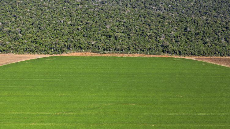 Un champ bordant la forêt amazonienne, le 8 août 2020 à Sorriso (Brésil). (FLORIAN PLAUCHEUR / AFP)